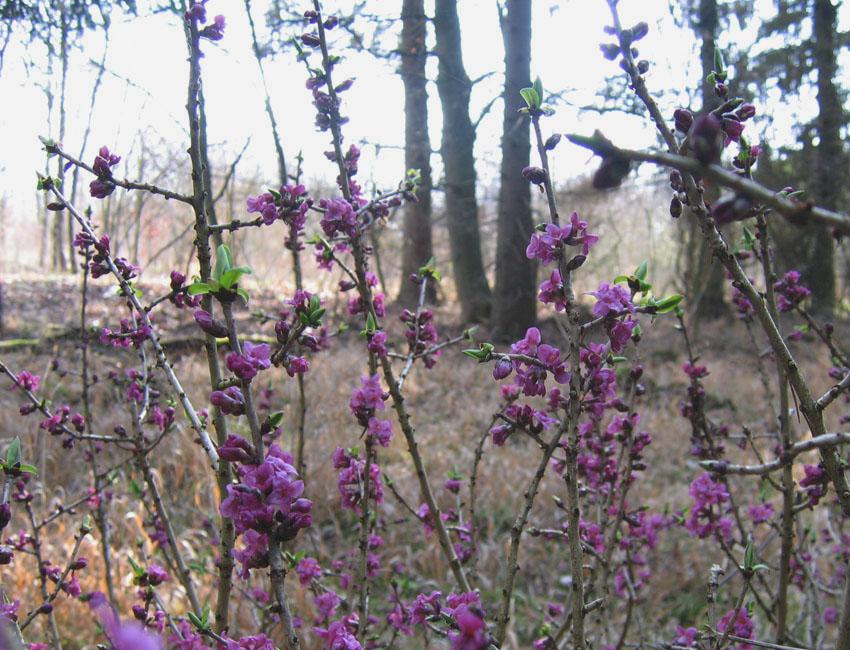 Bild Frühling